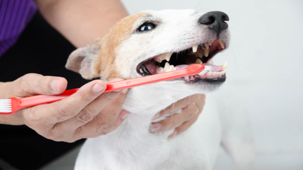 dog dental hygiene tips from pacific heights veterinary hospital in renton washington